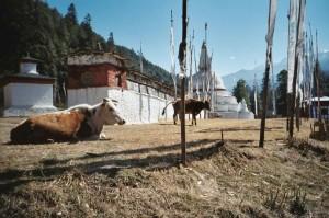 Bhutan5_0025